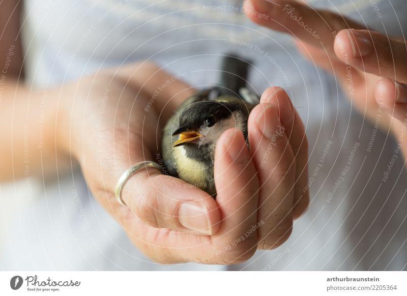 Verletzte Kohlmeise wird gepflegt Mensch Jugendliche Junge Frau Erholung Tier Erwachsene Leben Umwelt Gesundheit feminin Vogel liegen sitzen niedlich festhalten