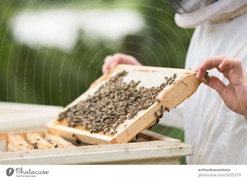 Junger Imker beim Bienenstock Lebensmittel Honig Honigbiene Ernährung Freizeit & Hobby Azubi Imkerei Imkerschleier Wirtschaft Bienenkorb Bienenwaben Mensch