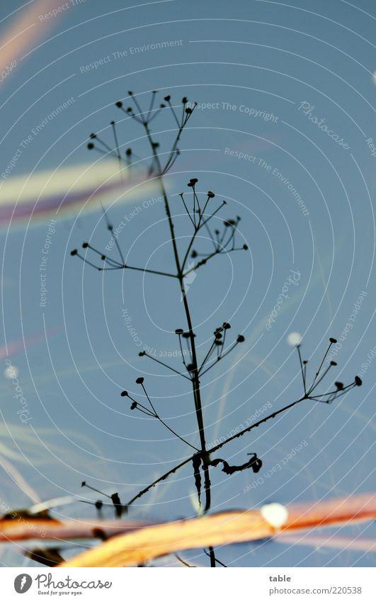 gedrehteherbstufergrasspiegelung Umwelt Natur Pflanze Urelemente Luft Wasser Himmel Gras Blatt Grünpflanze Wildpflanze Wasserpflanze Seeufer Flussufer verblüht