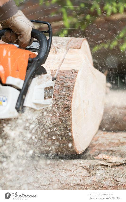 Förster mit Kettensäge sägt Baum Mensch Natur Jugendliche Pflanze Wald 18-30 Jahre Erwachsene Umwelt natürlich Holz Arbeit & Erwerbstätigkeit maskulin