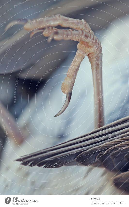 abgestürzt Wildtier Totes Tier Vogel Flügel Krallen Drossel liegen dunkel kaputt klein nah Gefühle Tierliebe Mitgefühl Überraschung Traurigkeit Trauer Tod Angst