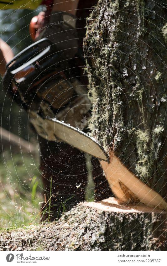 Baum wird mit Kettensäge gefällt Mensch Natur Jugendliche Sommer Junger Mann Wald Umwelt Holz Arbeit & Erwerbstätigkeit Freizeit & Hobby 13-18 Jahre