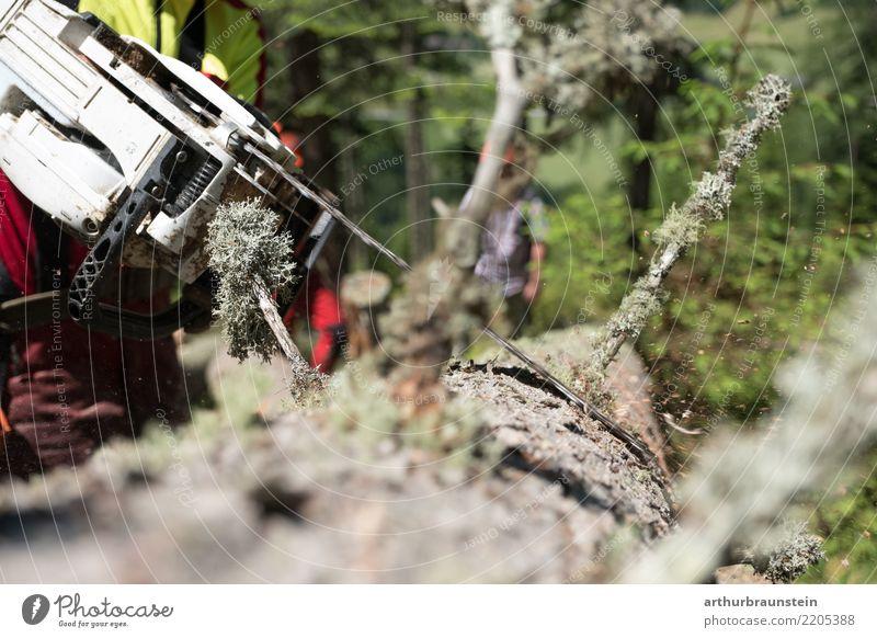 Förster mit Kettensäge beim Ast säubern Beruf Berufsausbildung Azubi Waldarbeiter Wirtschaft Landwirtschaft Forstwirtschaft Forstwald Säge Maschine Mensch
