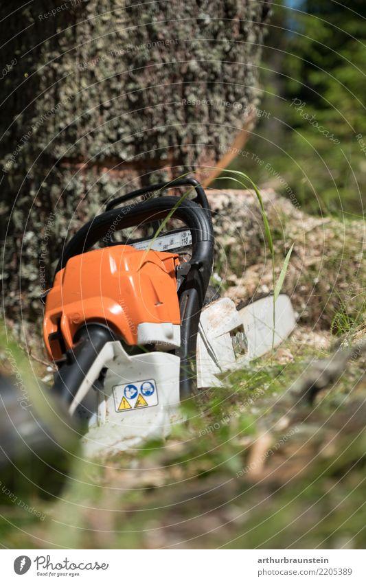 Kettensäge vor Baum Freizeit & Hobby Förster Baum fällen Landwirt Landwirtschaft Forstwirtschaft Werkzeug Technik & Technologie Umwelt Natur Pflanze Baumstamm