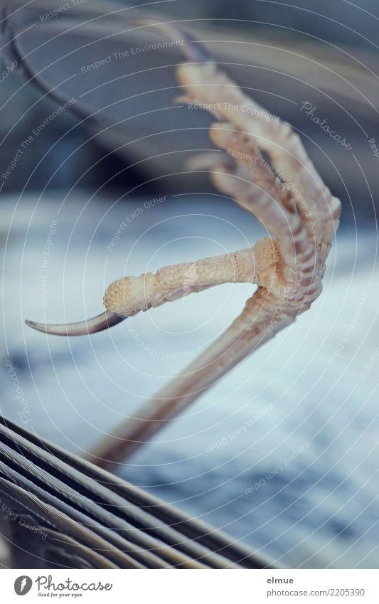 abgestürzt Wildtier Totes Tier Vogel Krallen Drossel Beine liegen dünn kaputt Spitze Gefühle Überraschung Traurigkeit Trauer Tod Schmerz Fernweh schuldig