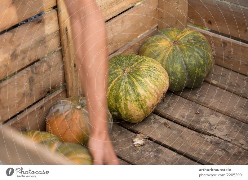Kürbis bei der Kürbisernte in Holzkiste Mensch Natur Jugendliche Pflanze Junger Mann Umwelt Herbst natürlich Lebensmittel Arbeit & Erwerbstätigkeit maskulin