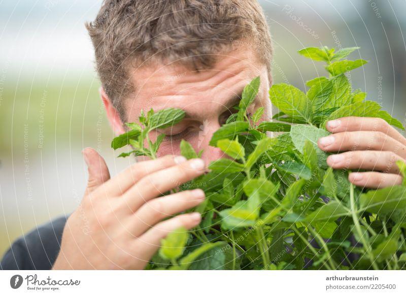 Junger Mann riecht an frischer Minze im Freien Lebensmittel Kräuter & Gewürze Minzeblatt Ernährung Bioprodukte Vegetarische Ernährung Gesundheit