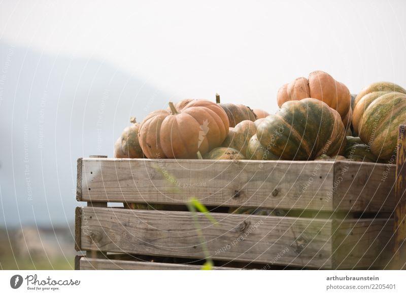 Kürbise in Holzkiste bei der Kürbisernte Lebensmittel Gemüse Kürbiszeit Kürbisgewächse Kürbisfeld Ernährung Bioprodukte Gesunde Ernährung Freizeit & Hobby