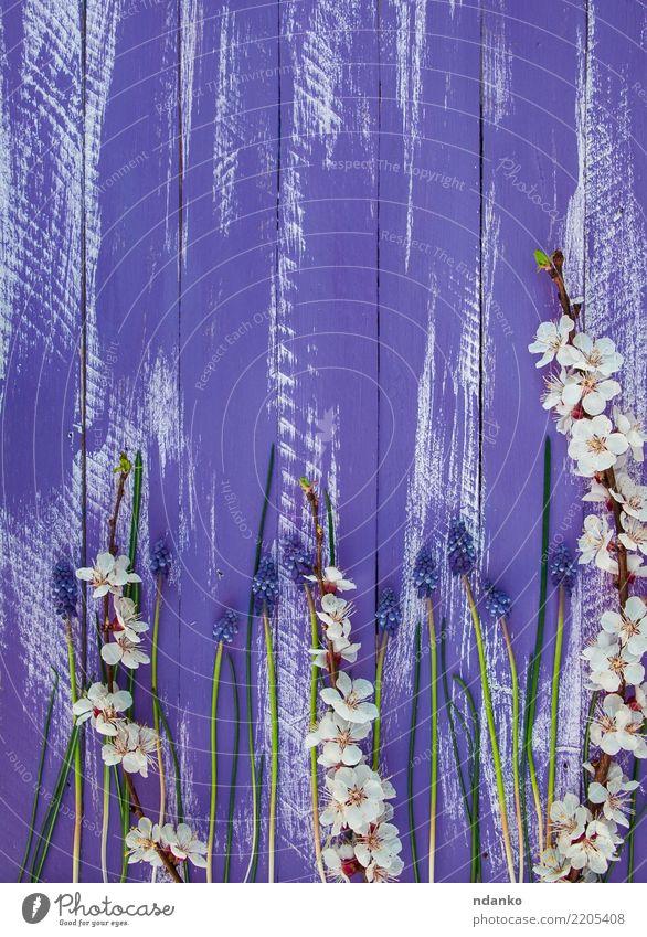Pflanze blau weiß Blume Holz frisch Blühend violett schäbig Aprikose