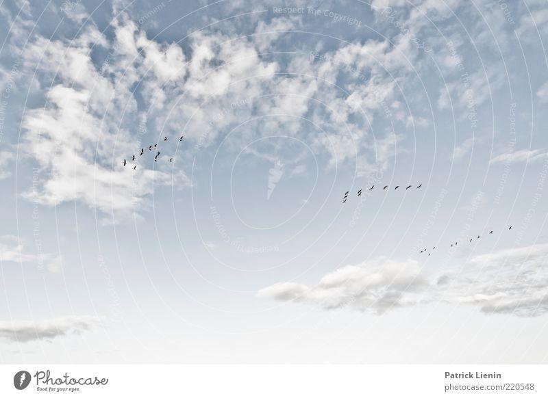 The high road Natur schön Himmel Wolken Tier Gefühle oben träumen Luft Stimmung Vogel Wind Wetter Umwelt fliegen hoch
