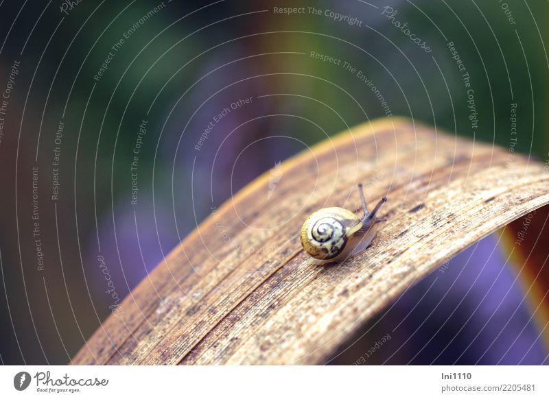 Mini Schnecke Natur Pflanze blau grün Tier Blatt gelb Herbst klein Garten braun Wohnung Park Wildtier violett Herbstlaub