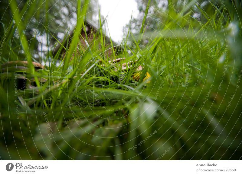 Wohnen im Grünen harmonisch Erholung Garten Umwelt Natur Landschaft Pflanze Sommer Baum Gras Wiese Menschenleer Hütte grün Versteck geheimnisvoll Farbfoto