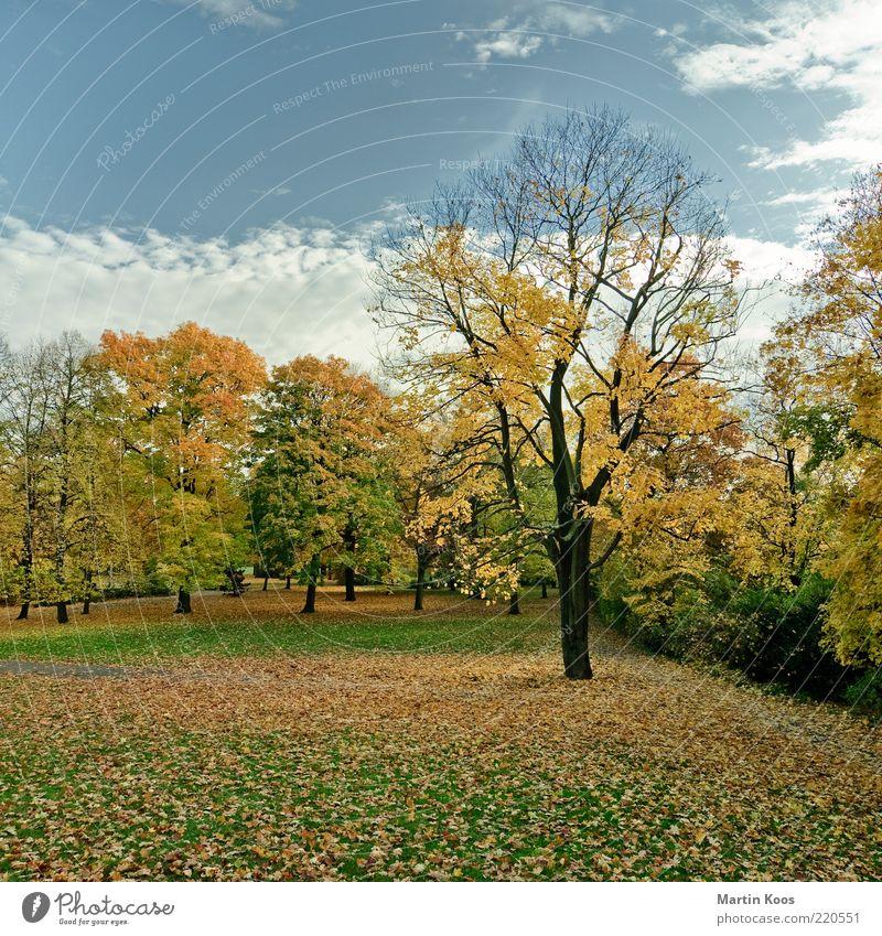 Herbst 2010 Natur schön alt Himmel Baum Blatt Wolken Farbe Leben Erholung Wiese Park Landschaft Stimmung Umwelt