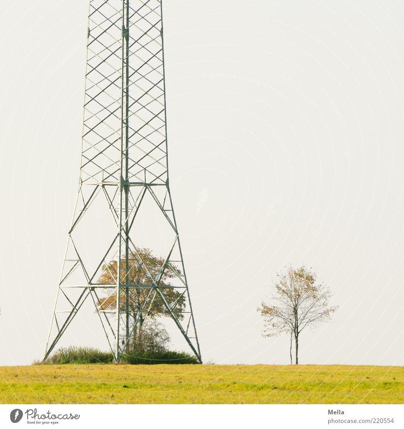 Drinnen und draußen Technik & Technologie Energiewirtschaft Strommast Umwelt Natur Landschaft Pflanze Baum Wiese Metall stehen frei Freiheit Umweltverschmutzung