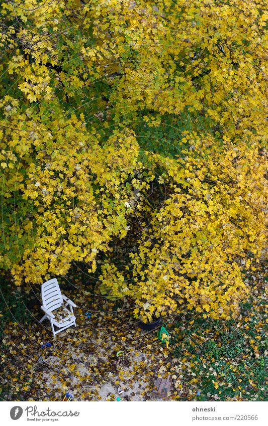 Schattiges Plätzchen Baum Blatt Einsamkeit Wiese Herbst Garten Stuhl Vergänglichkeit Baumkrone Liegestuhl Herbstlaub Vogelperspektive Herbstfärbung Gartenstuhl Plastikstuhl