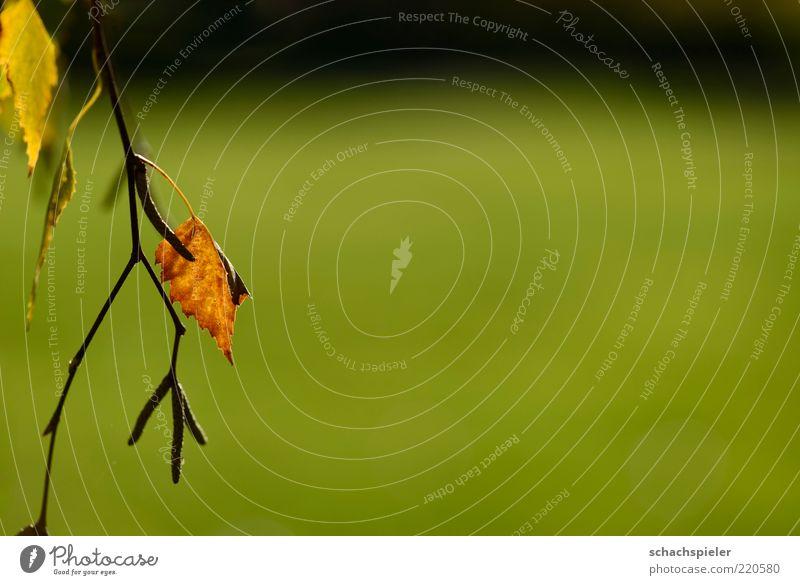 alleine ... Natur Pflanze Herbst Blatt braun grün Einsamkeit Traurigkeit Farbfoto Außenaufnahme Nahaufnahme Textfreiraum rechts Textfreiraum oben