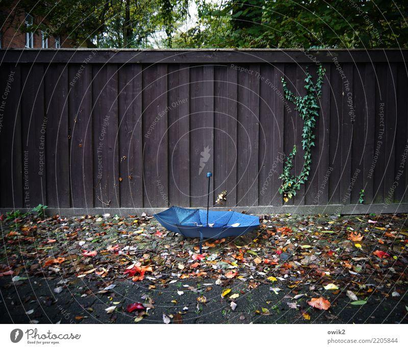 Vom Winde verweht Herbst Sturm Baum Blatt Herbstlaub Haus Regenschirm Holzzaun unten blau braun mehrfarbig grün orange rot Gelassenheit verlieren verloren