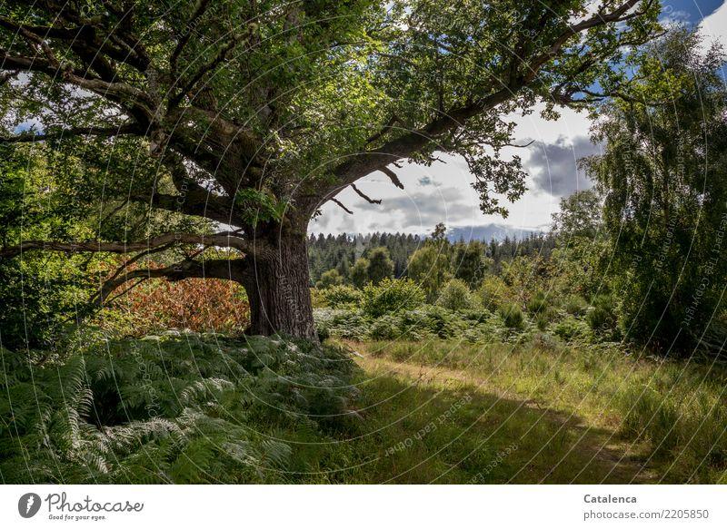 Sommerlandschaft mit Baum Natur blau Pflanze grün Landschaft Wolken ruhig Wald Leben gelb Umwelt Wege & Pfade Wiese Gras