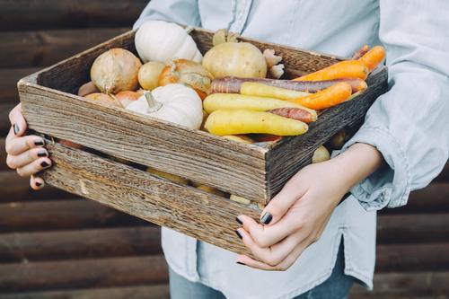 Erntezeit Lebensmittel Gemüse Ernährung Bioprodukte Vegetarische Ernährung Mensch feminin Frau Erwachsene Hand 18-30 Jahre Jugendliche frisch Gesundheit