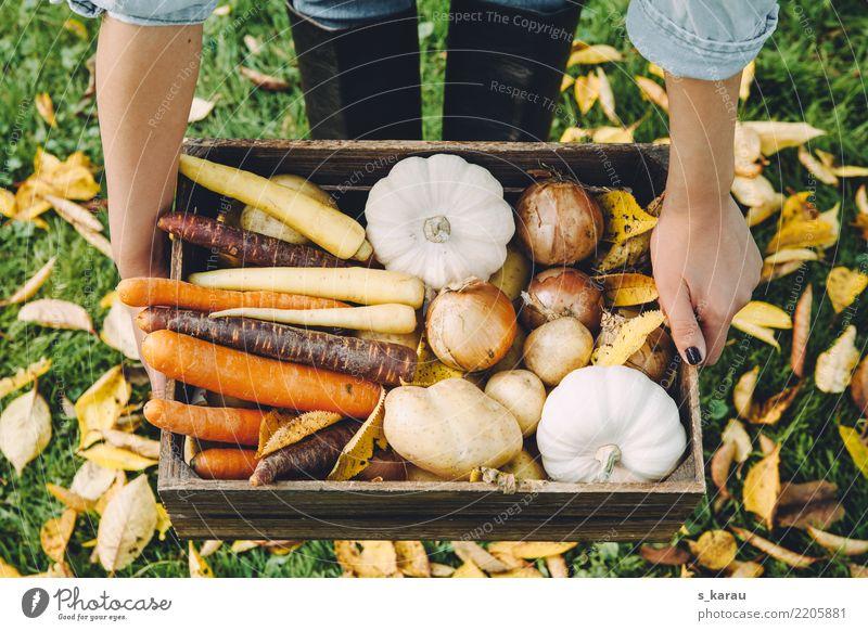 Herbstgemüse Lebensmittel Gemüse Ernährung Bioprodukte Vegetarische Ernährung Frau Erwachsene Umwelt frisch Gesundheit gelb orange Lebensfreude nachhaltig Möhre
