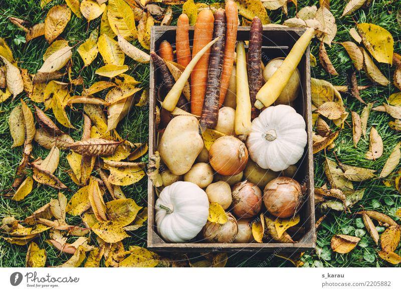 Herbstgemüse Erntedankfest Landwirtschaft Forstwirtschaft Blatt Garten frisch Gesundheit mehrfarbig nachhaltig Natur Jahreszeiten Kürbis Kürbiszeit Möhre
