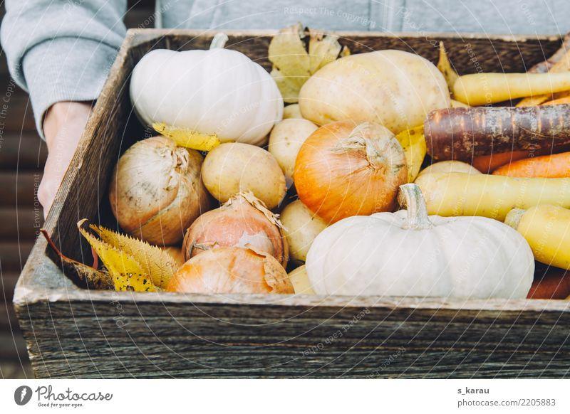 Herbst Mensch Gesundheit Holz maskulin frisch Landwirtschaft Gemüse Jahreszeiten Ernte Bioprodukte Vegetarische Ernährung Kürbis Möhre Vegane Ernährung