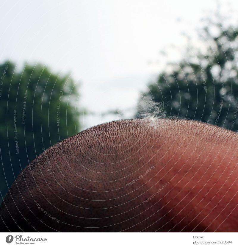 flauschig auf kratzig Mensch Mann Erwachsene Haare & Frisuren Kopf maskulin Haut Behaarung einzigartig Glatze Samen anonym Bildausschnitt Pollen Anschnitt