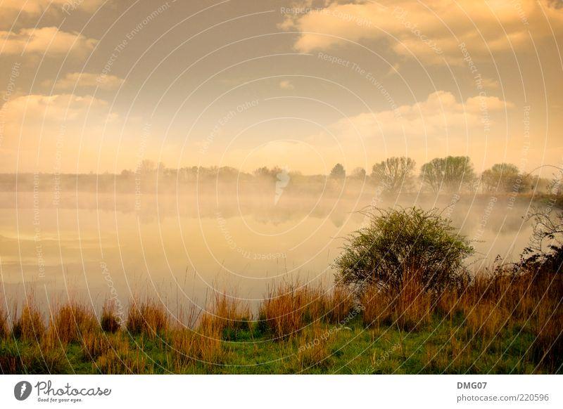 Herbst Umwelt Natur Landschaft Wasser Himmel Wolken Nebel Gras Sträucher Wiese Seeufer Moor Sumpf Teich dunkel exotisch hell blau gelb grau grün Gefühle schön