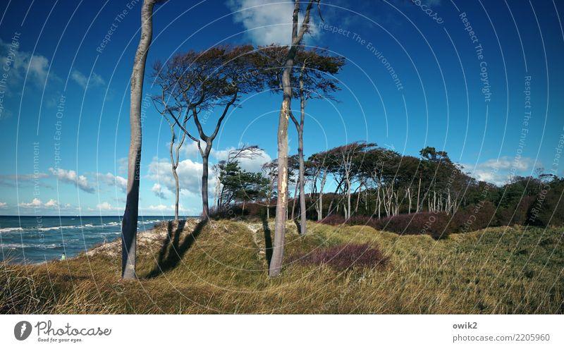 Nah am Wasser gebaut Umwelt Landschaft Himmel Wolken Horizont Wind Pflanze Baum Gras Sträucher Wald Ostsee Weststrand schaukeln stehen gigantisch groß