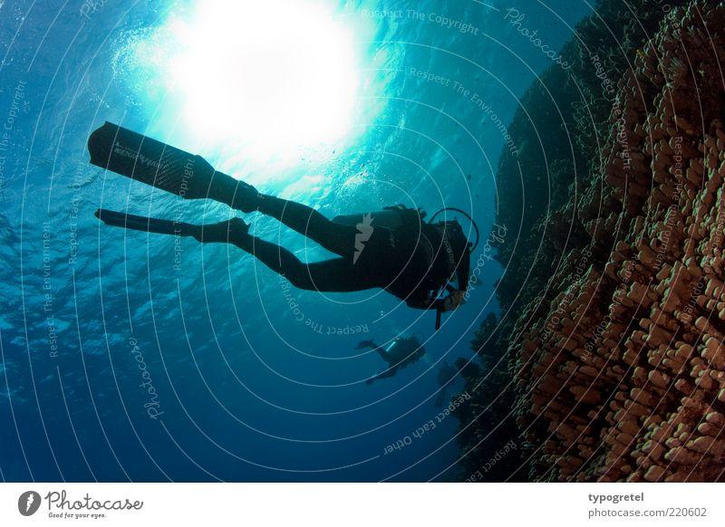 Herbsttauchen Mensch blau Wasser Ferien & Urlaub & Reisen Sommer Sonne Meer ruhig Erholung Sport Schwimmen & Baden Wellen Tourismus Abenteuer Coolness genießen