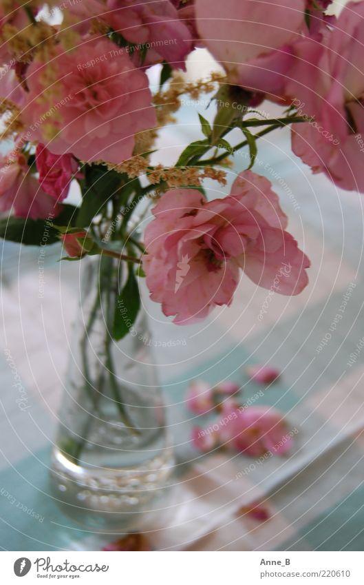 Vielen Dank für die Blumen! schön weiß Blume blau ruhig Blüte Stimmung rosa Glas Rose Perspektive ästhetisch Romantik Kitsch Dekoration & Verzierung Vergänglichkeit