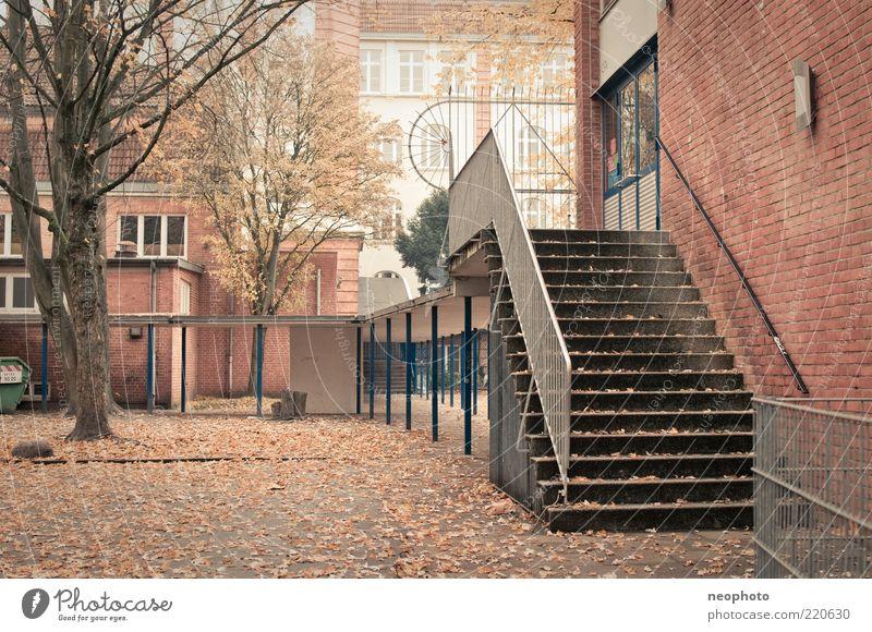Herbst Baum Blatt Schule Schulgebäude Treppe Asphalt Backstein Treppengeländer Platz Herbstlaub Schulhof laublos Herbstfärbung Backsteinfassade