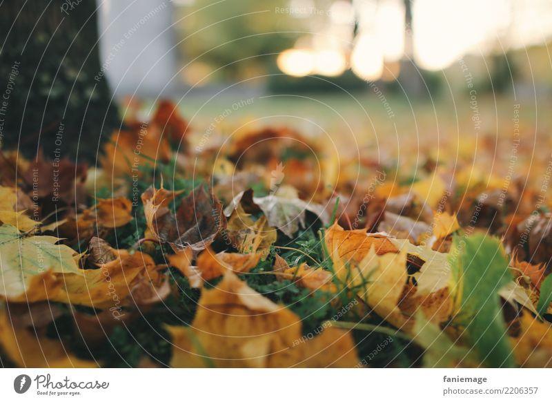 Herbstabend Umwelt Natur Baum Herbstlaub Blatt fallen Gras Wiese Sonnenuntergang Abendsonne herbstlich Spaziergang orange braun grün Bioprodukte natürlich