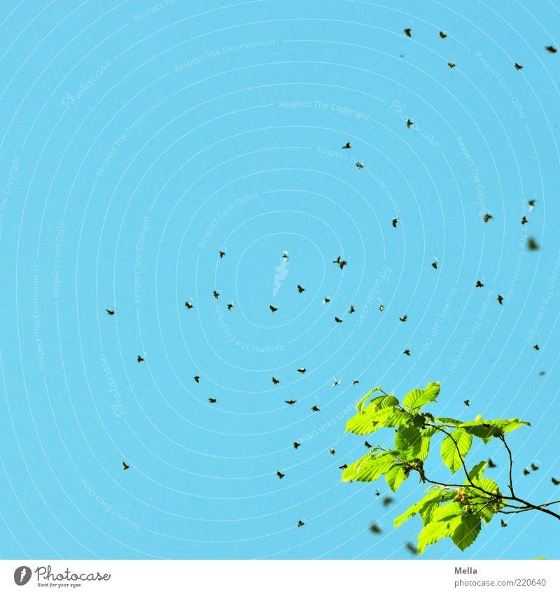 Herr(in) der Fliegen Umwelt Natur Luft Himmel Pflanze Blatt Ast Tier Schwarm fliegen Ekel klein natürlich viele blau grün Summen Insekt Silhouette Blauer Himmel