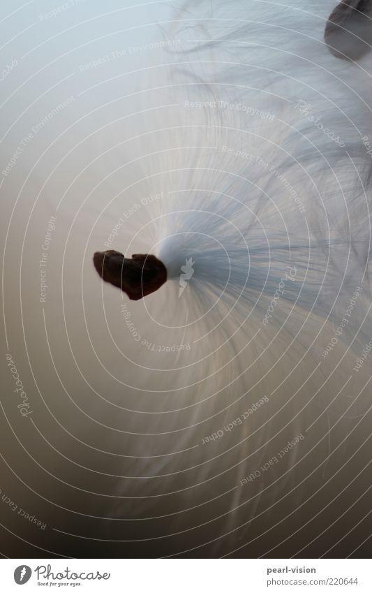 Herz Natur Pflanze Herz leicht Schweben Makroaufnahme Leichtigkeit Samen Quaste Fortpflanzung Zyklus Vor hellem Hintergrund