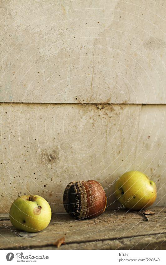 faul in der Sonne liegen Natur Sommer Herbst dehydrieren braun gelb Vergänglichkeit Wandel & Veränderung Apfel verfaulen Kompost Schimmelpilze Holz verdorben