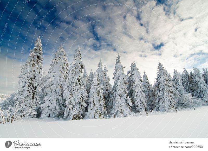 ...also ich freu` mich drauf !! Winter Schnee Umwelt Natur Landschaft Klima Schönes Wetter Eis Frost Baum Wald blau weiß Tanne Himmel Schwarzwald Licht