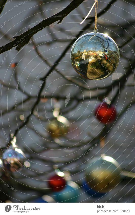 Balance II Feste & Feiern Winter Kitsch Krimskrams hängen dunkel Tradition Weihnachten & Advent Christbaumkugel Weihnachtsdekoration Zweige u. Äste glänzend