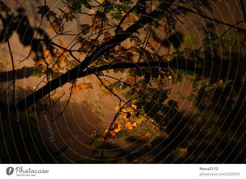 Nebelwald Natur Blatt schwarz gelb dunkel Herbst Tod Stimmung braun Angst Wetter gold Hoffnung Trauer bedrohlich
