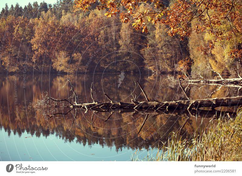 Komische Insektenwesen im Wasser Umwelt Natur Landschaft Pflanze Herbst Wetter Schönes Wetter Baum Wildpflanze Seeufer natürlich Surrealismus Symmetrie Tod kahl
