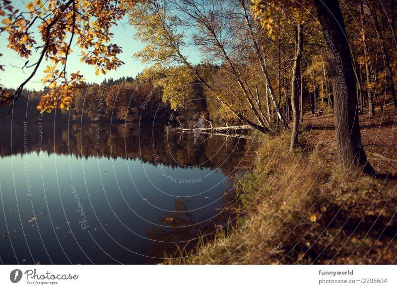 Am Ufer Ferien & Urlaub & Reisen Ausflug Umwelt Natur Landschaft Pflanze Erde Wasser Himmel Wolkenloser Himmel Sonnenlicht Herbst Baum Seeufer Zufriedenheit