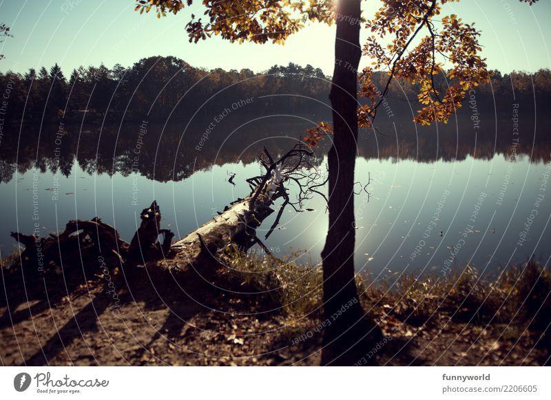 Am Ufer der Spiegelung Natur Landschaft Pflanze Himmel Wolkenloser Himmel Sonne Sonnenaufgang Sonnenuntergang Sonnenlicht Herbst Wetter Schönes Wetter Baum