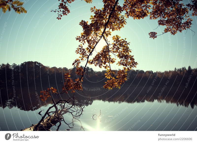 Herbstäste Umwelt Natur Pflanze Wasser Himmel Wolkenloser Himmel Sonne Sonnenlicht Baum Seeufer Einsamkeit Erholung Idylle Blatt orange Reflexion & Spiegelung