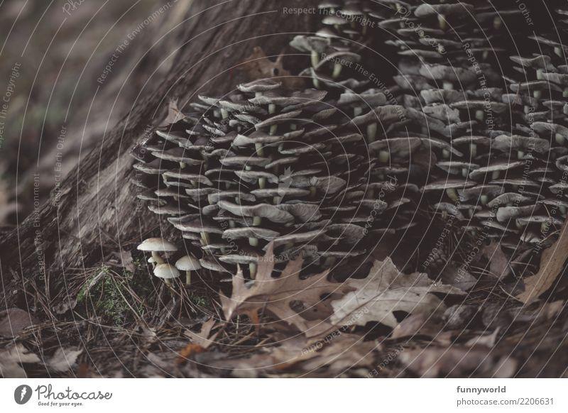 Pilztürme Umwelt Natur Baum Zusammenhalt Pilzhut viele mehrere Gruppenzwang Herbst herbstlich Blatt Waldboden Zusammensein Gedeckte Farben Nahaufnahme