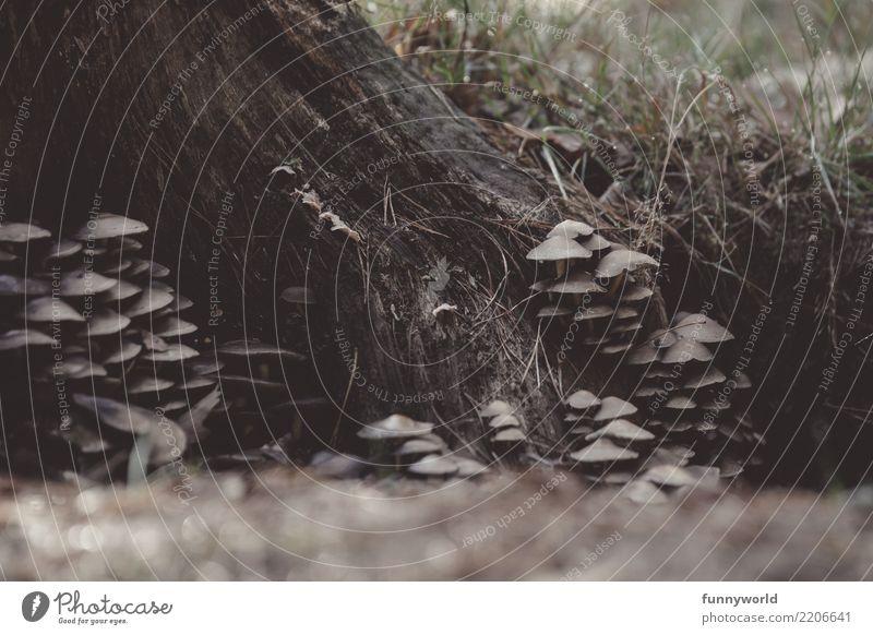 Wir verstecken uns. Herbst Pilz Pilzhut Wald unten Idylle Leben Natur Symbiose Schmarotzer aufeinander Waldboden Baumstamm Gesellschaft (Soziologie)
