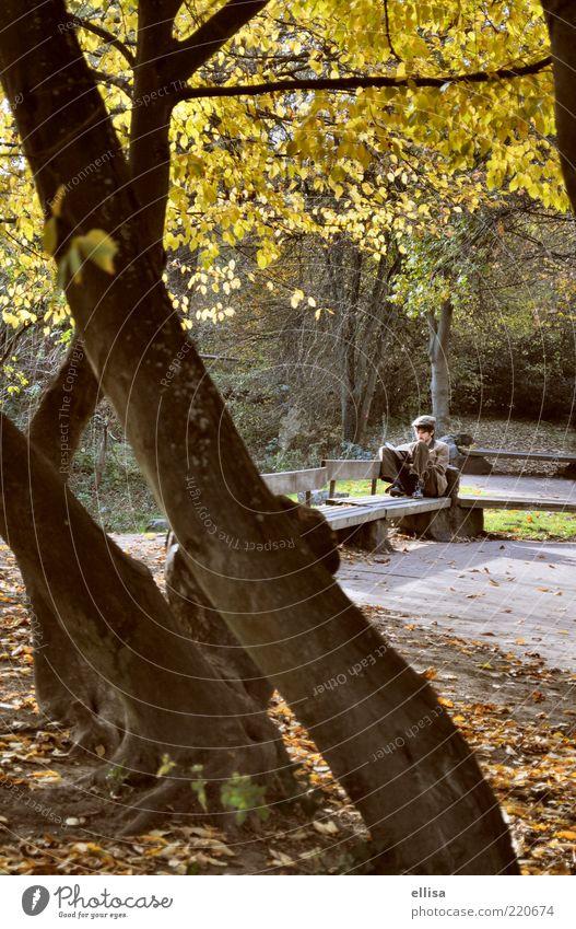 Northhampton Park Natur Baum Blatt gelb Herbst braun gold sitzen maskulin lernen Pause lesen Bildung Student Baumstamm