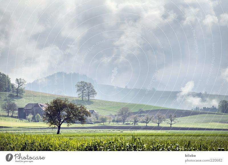 Bewölkt mit Sonnenschein Natur Landschaft Gewitterwolken Herbst Klima Wetter Unwetter Wind Sturm Nebel Regen Wiese Feld grau grün Stimmung bedrohlich Baum HDR