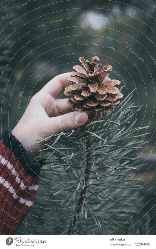 Tannenzapfen in der Hand des Teenagers. Lifestyle Design Winter Dekoration & Verzierung Feste & Feiern Weihnachten & Advent Silvester u. Neujahr Mensch Frau