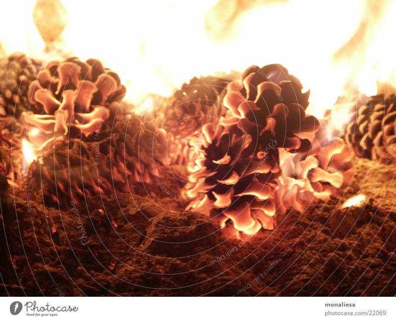 Glühende Zapfen 2 Wärme Brand Physik Geruch Flamme Grill Brandasche Glut Tannenzapfen