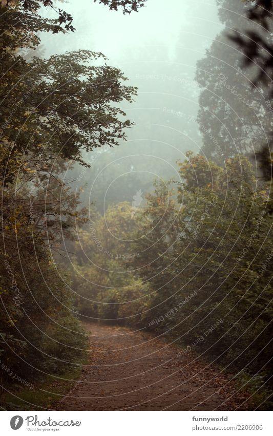 Der Weg nach... schlechtes Wetter Nebel Pflanze Baum Sträucher Park braun grün Angst Zukunftsangst Endzeitstimmung Risiko Stimmung Surrealismus Wege & Pfade